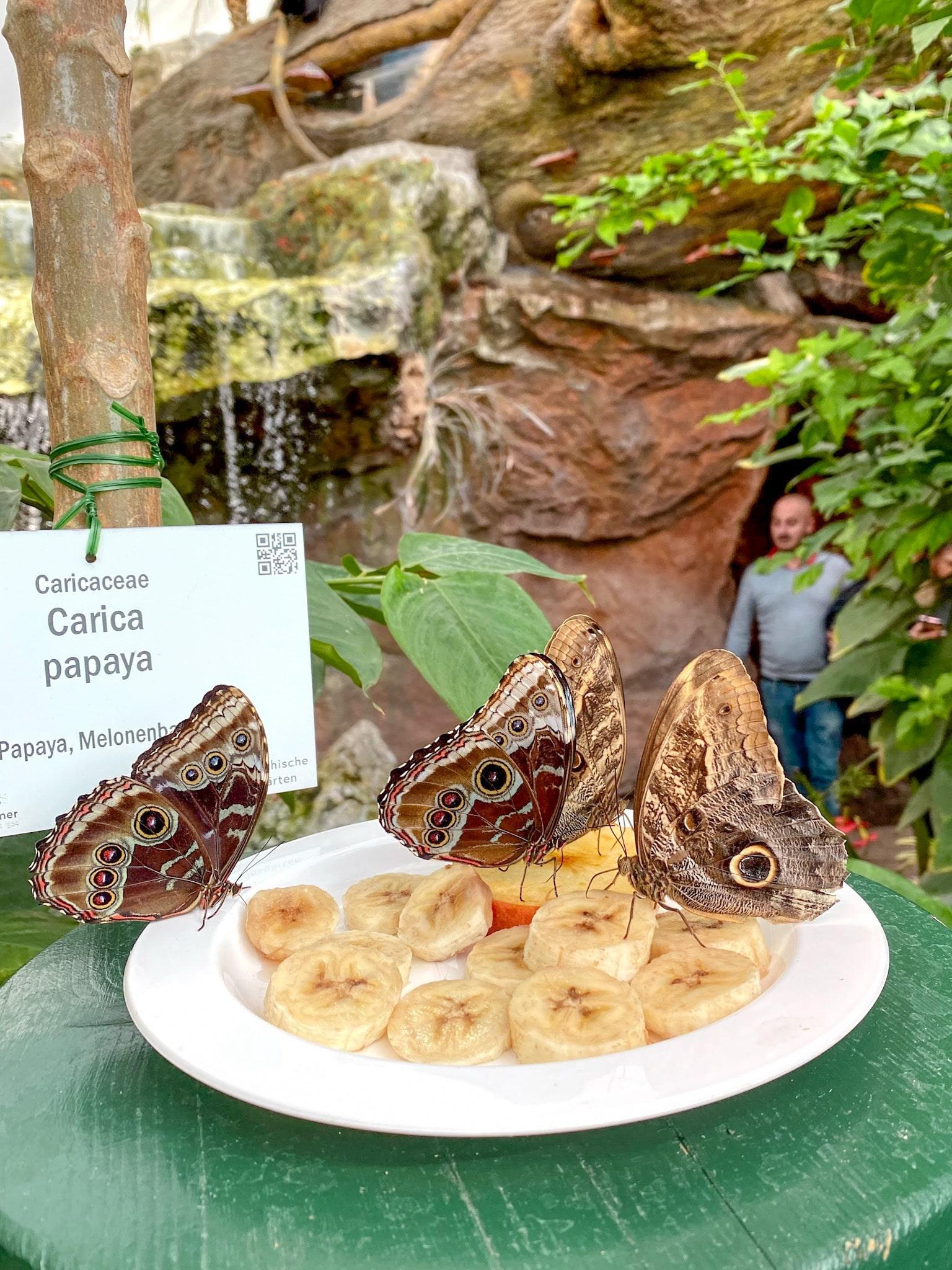 The Butterfly House (Schmetterlinghaus) in Vienna, Austria.